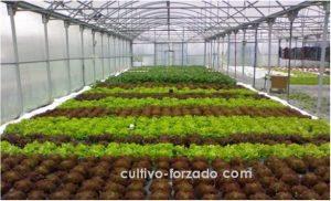 mallas para cultivo protegido