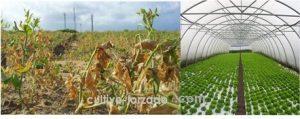 mallas de protección para cultivo