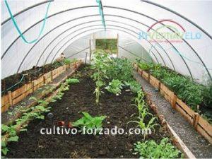 hortalizas con malla sombra