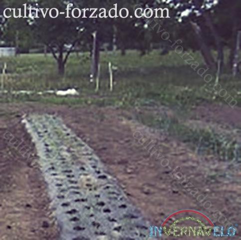 cubierta invernavelo para el control del cultivo