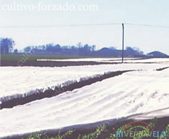 colocación de la manta térmica invernavelo sobre los cultivos
