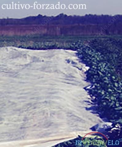 método de protección de cultivo utilizando la manta térmica Invernavelo