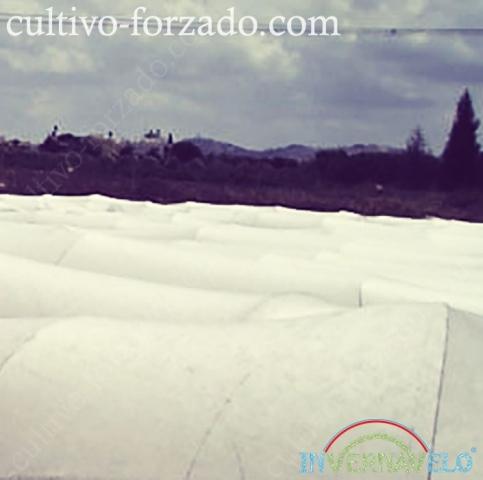 microtuneles invernavelo colocados en el campo para la protección de cultivos