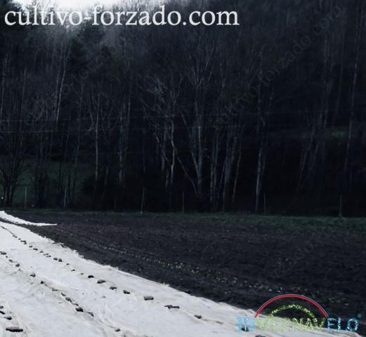manta térmica para protección de cultivos invernavelo