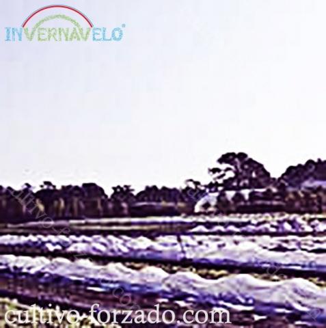 manta térmica invernavelo para el control de cultivos